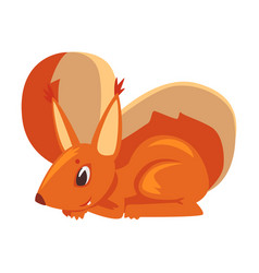 cute squirrel amusement little rodent animal vector image