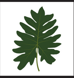 green leaf on white background vector image