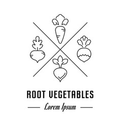 line banner root vegetables vector image