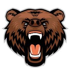 Angry brown bear head vector image