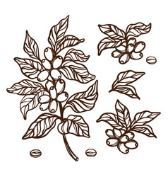 coffee outline branches clip art set vector image