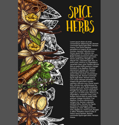 herb and spice chalkboard banner with spicy plant vector image