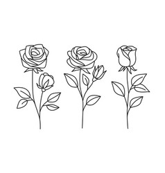 line rose with leaves hand drawn set vector image