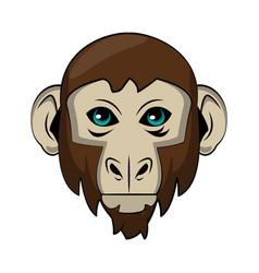 Monkey wild animal vector