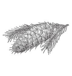 Pine cone of bigcone douglas fir vintage vector