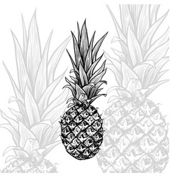 pineapple hand drawn isolated sketch vector image
