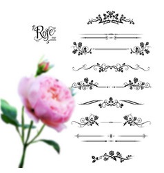 roses black set vector image