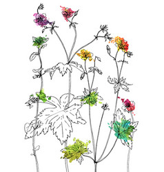 set ink drawing herbs and flowers vector image