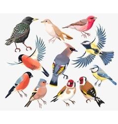 Set songbirds vector