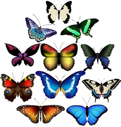 Summer butterflies vector image