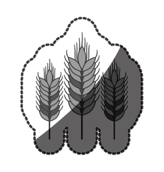 Isolated wheat ear design vector image