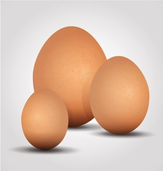 Eggs on a white background vector image