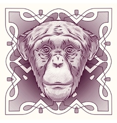hand drawn portrait monkey isolated vector image