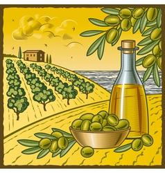 Olive harvest vector