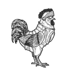 rooster cock in knight armor sketch vector image
