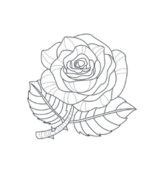 Rose Flower Monochrome Drawing For Coloring Book vector image
