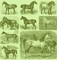 Set 9 engraved horses vector