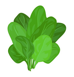 Spinach leaves icon cartoon style vector