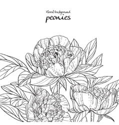 Peonies black line art background on white vector image vector image