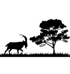 silhouette of goat and tree vector image vector image