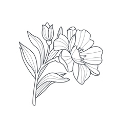Calendula Flower Monochrome Drawing For Coloring vector image