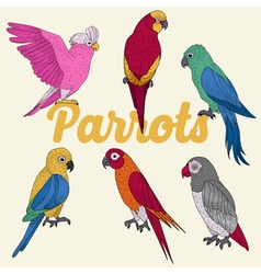 Exotic Parrots Hand Drawn vector