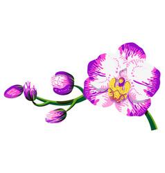 Orchid bright phalaenopsis vector