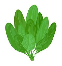 Spinach branch icon cartoon style vector