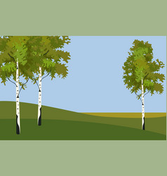 background tree birch in springtime vector image