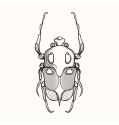 Hand drawn engraving Sketch of Scarab Beetle May vector