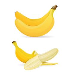 isolated bananas on white background vector image