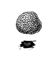 Truffle mushroom hand drawn vector image vector image