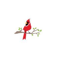 cardinal bird logo symbol design vector image