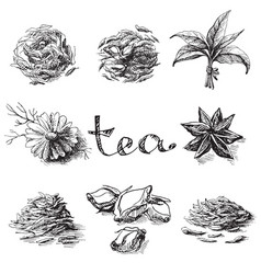 Collection of tea leaves vector