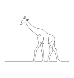 Continuous one line giraffe drawing vector