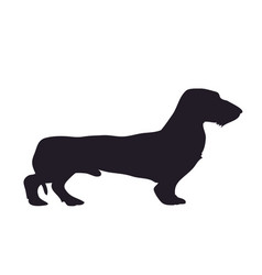 dog stands dachshund silhouette vector image