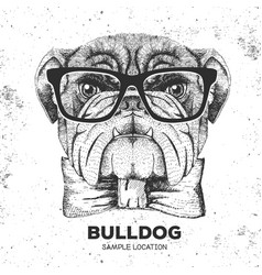 hipster animal bulldog hand drawing muzzle of vector image vector image