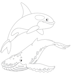 Killer whale and hunchbacked whale vector
