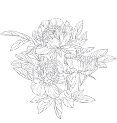 Peonies line art isolated on white background vector image