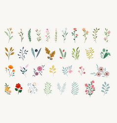 Set floral elements vector