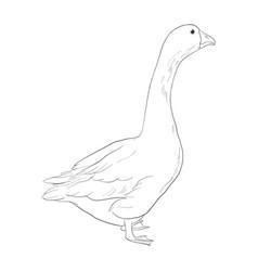 sketch goose vector image