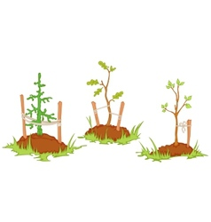 young trees vector image vector image
