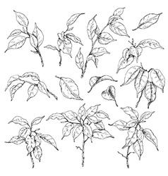 doodle ficus set vector image vector image
