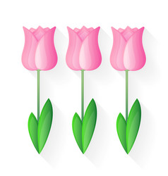 tulip flat style vector image vector image