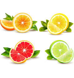 Citrus Fruits Segments 4 Realistic Icons vector