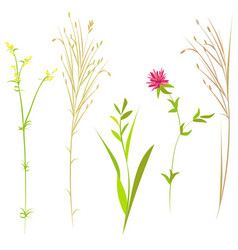 Set wildflowers and herbs vector