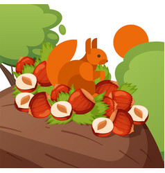 squirrel stock nuts hazelnut wood sun isolated vector image