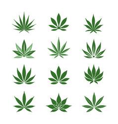 stylized hemp leaves vector image