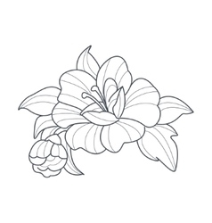 Dog Rose Flower Monochrome Drawing For Coloring vector image vector image