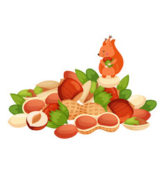 character squirrel stock nut hazelnut almond vector image